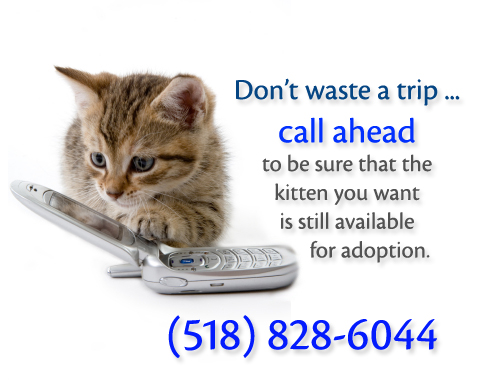 CGHS call ahead for kittens - Adopt-A-Pet