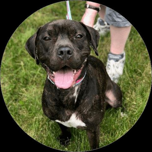 Columbia Greene Humane Society black dog - Home