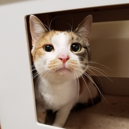 Columbia Greene Humane Society cat box - Adopt-A-Pet