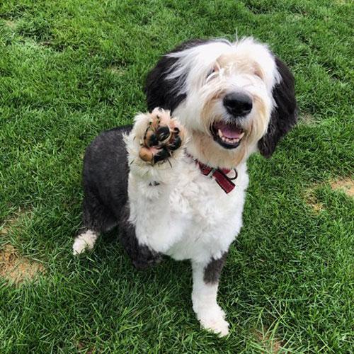 dog paw - Adopt-A-Pet